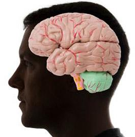 psychologie.jpg